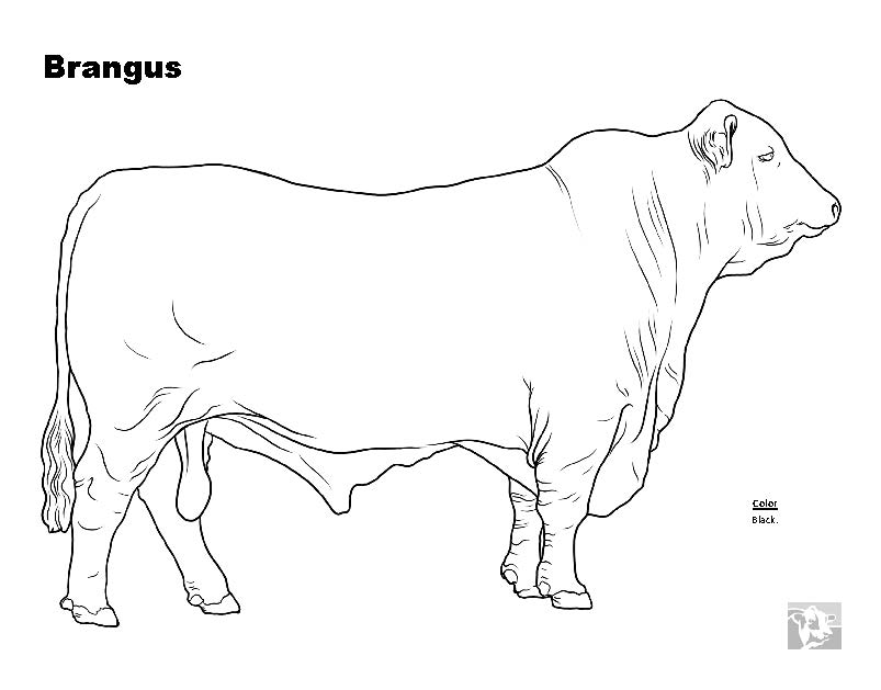 Free Coloring Pages Of Angus Bull