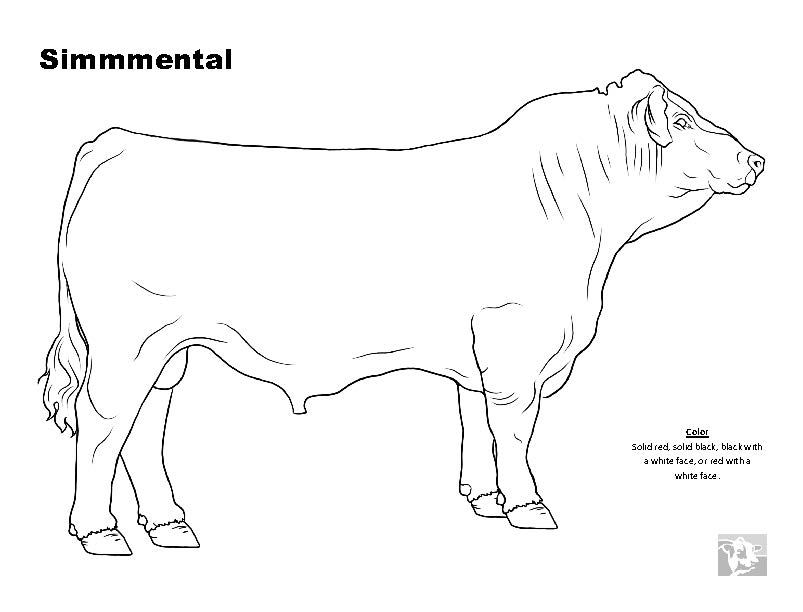 Cattle Breed Coloring Pages - Simmental